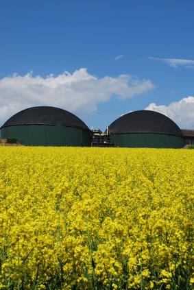 Biomasse für die Wärmeerzeugung © Thomas Otto - Fotolia.com